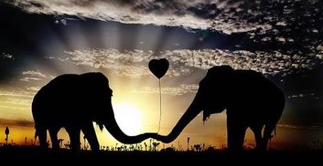 elefante puede morir de corazón roto - de emaze